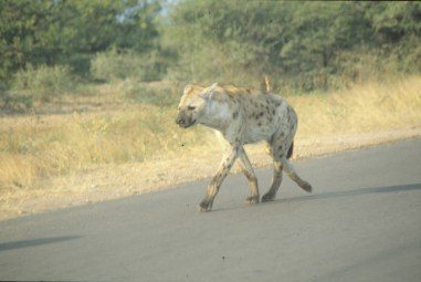 RSA 045 Kruger parc