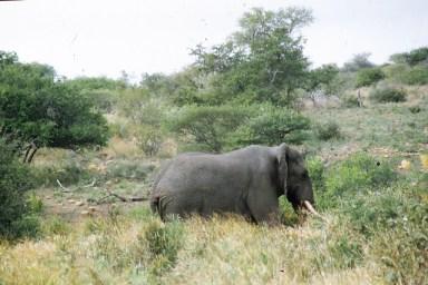 RSA 047 Kruger parc