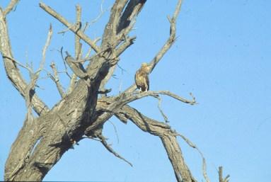 RSA 058 Kruger parc