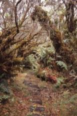 Forêt de Bedour