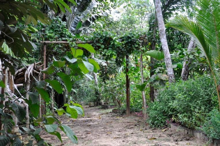 1100 Mundo amazonico