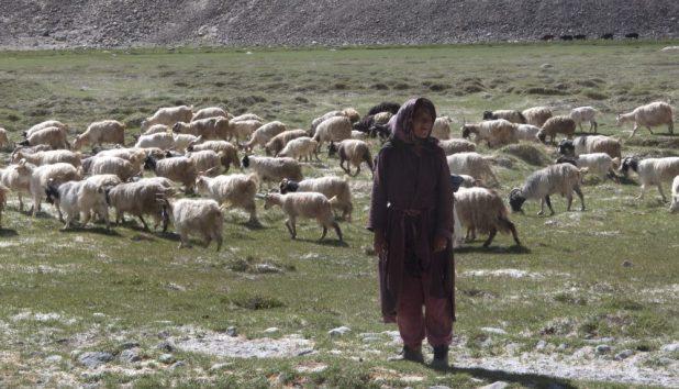 nomades éleveurs