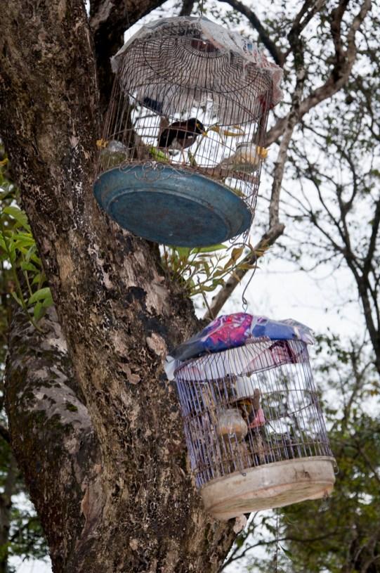 les cages, présentes partout