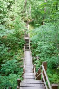 forêt parc gauja