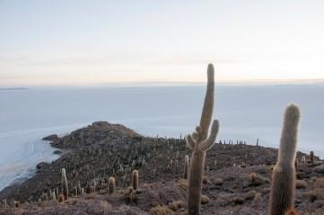 salar de Uyuni : isla del pescado
