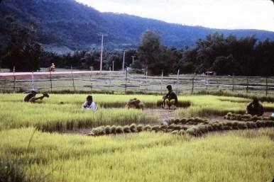 paysage de l'Isaan