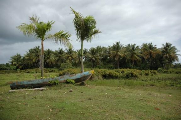 RD 062 Mangrove