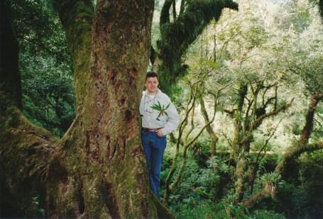 Forêt entre Salta et Jujuy