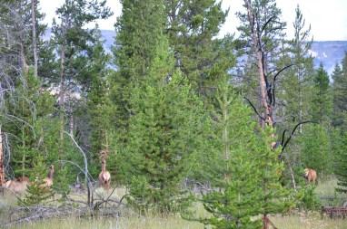 USA 670 Yellowstone
