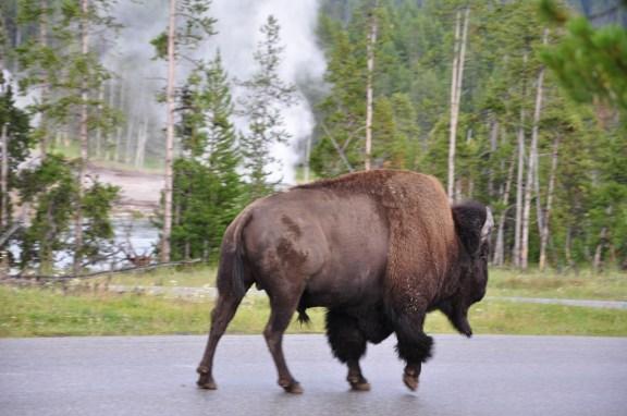 USA 696 Yellowstone