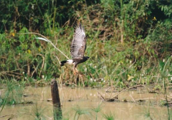 214 Pantanal