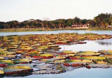216 Pantanal
