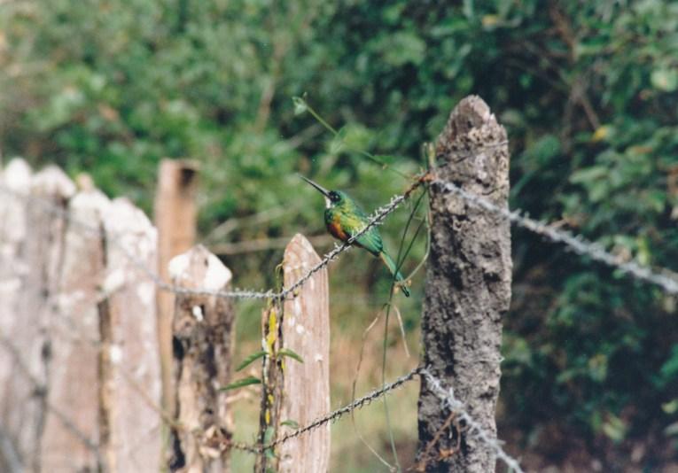223 Pantanal