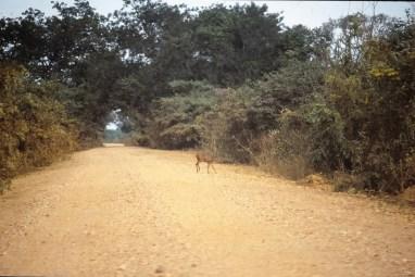 257 br pantanal