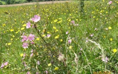 Nature Walks – Tracton Biodiversity Group
