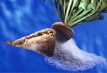 ISOMALT Pure beet sugar
