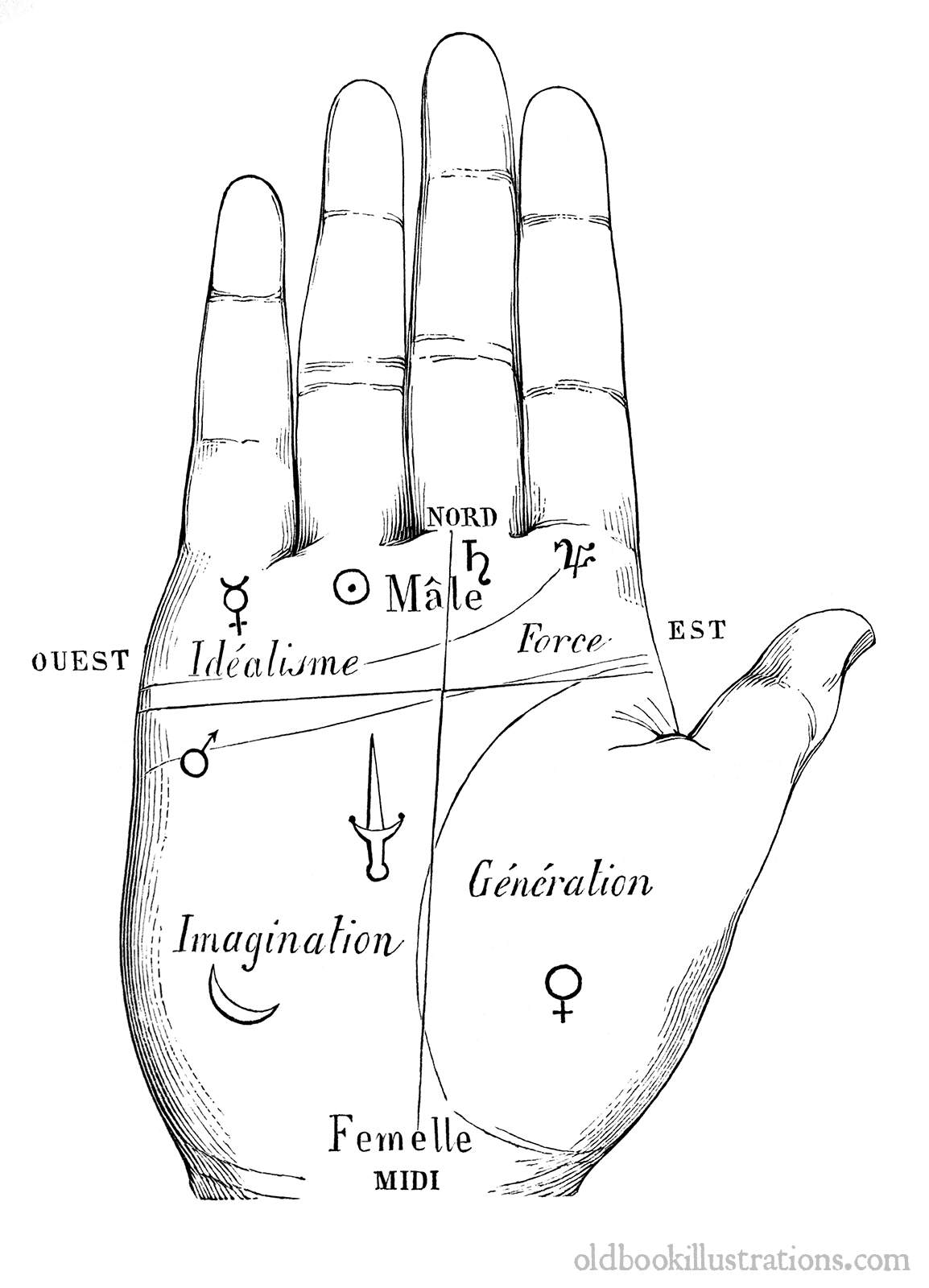 Palmistry Division Of The Hand Old Book Illustrations