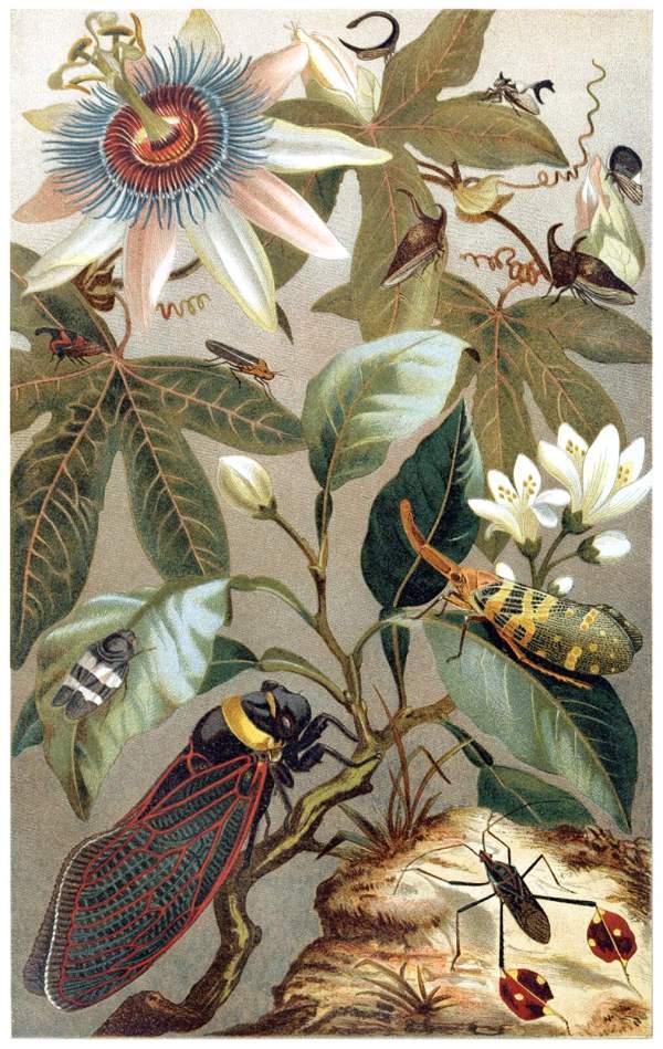 Cicadas Al Book Illustrations