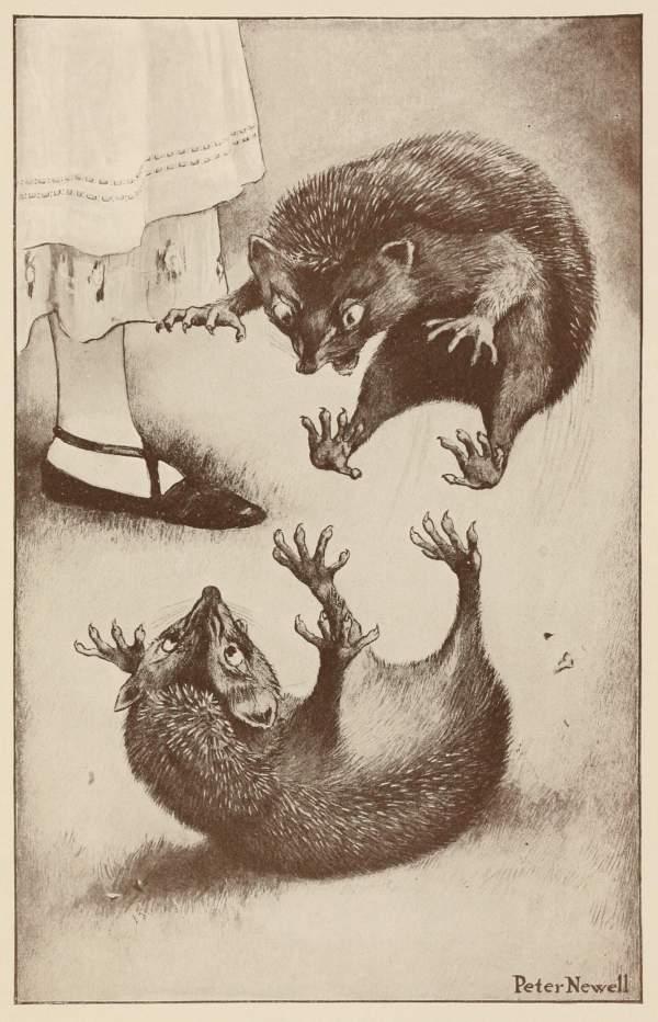 Hedgehog Fight Book Illustrations