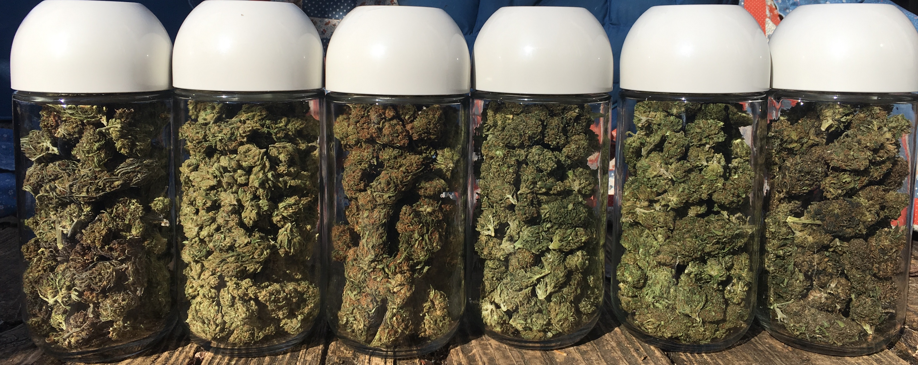 6 jars of different types of hemp