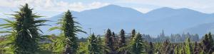 Southern Oregon hemp field in front of mountain range