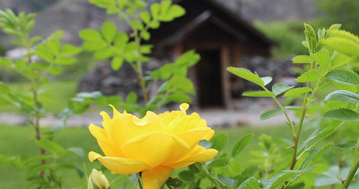 gristmill-applehouserose