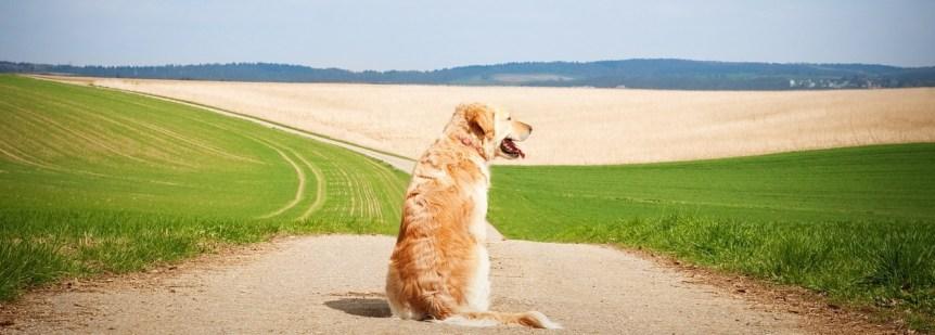 Dog Liability Insurance