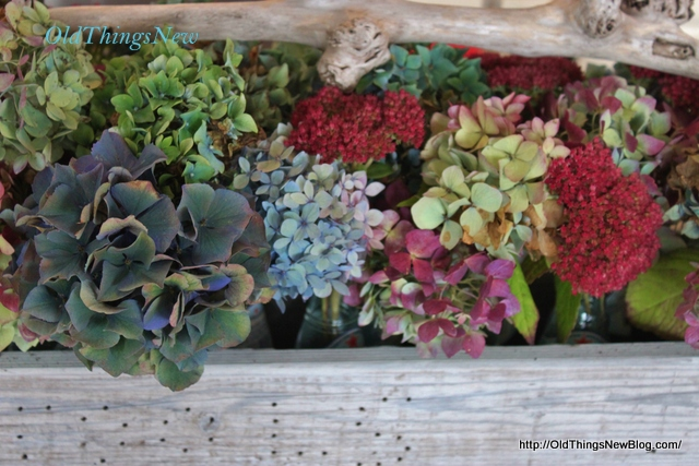 11-Hydrangeas in tool box 054