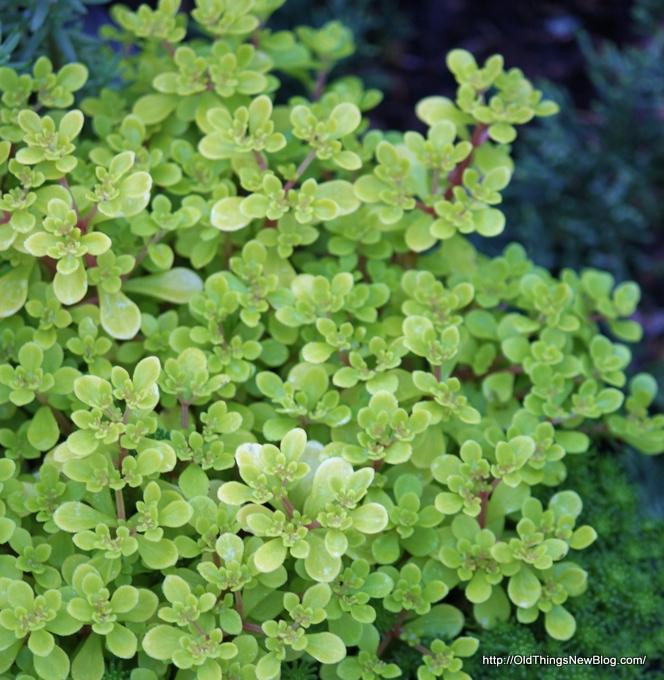 01-Spring Greens 002