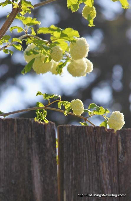 04-Spring Greens 025