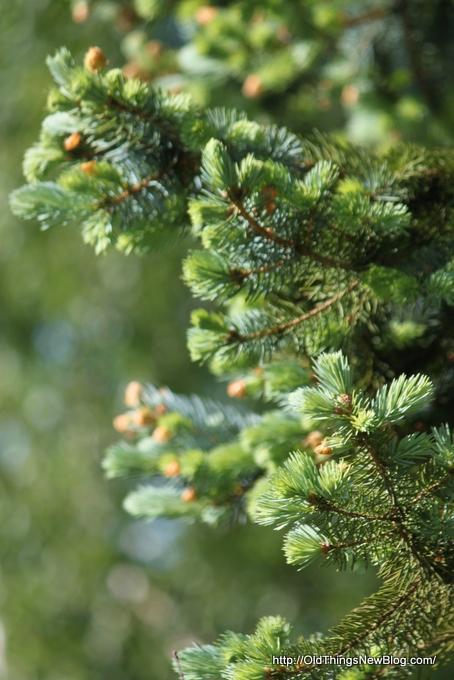 07-Spring Greens 035