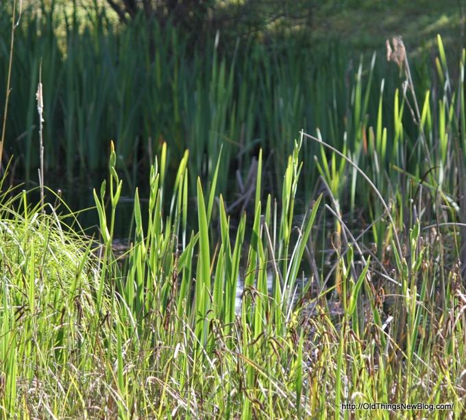 11-Spring Greens 061