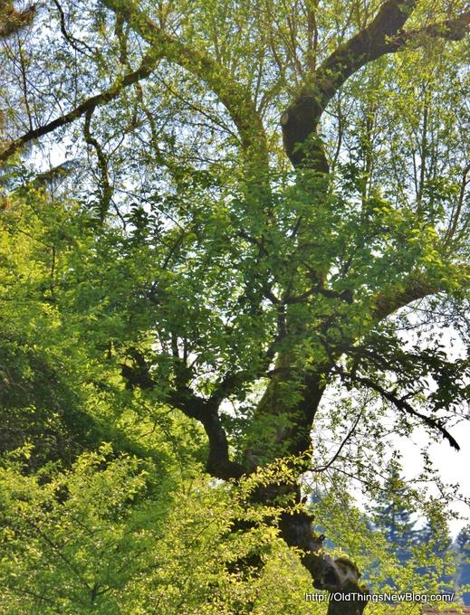 18-Spring Greens 101