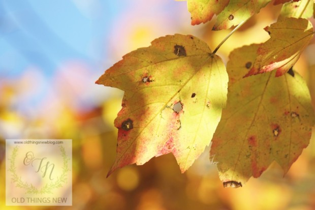 Fall in my yard 029