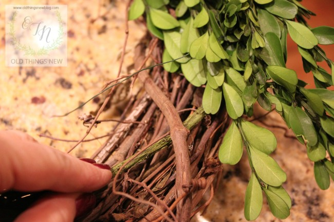 Boxwood Wreath 001