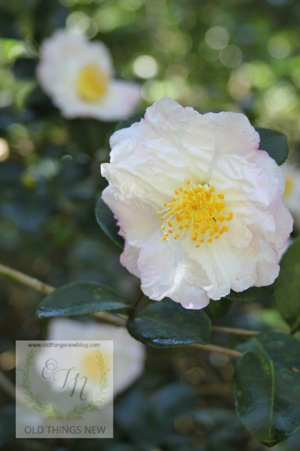 Magnolia Plantation 033