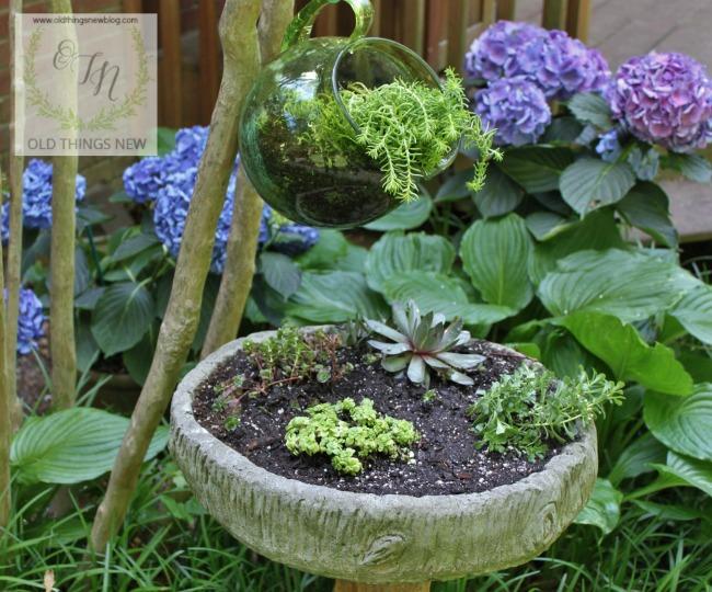 Succulent birdbath 001