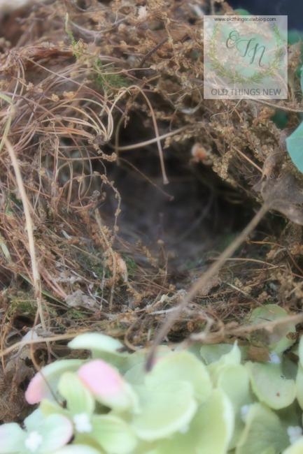 Bird's Nest 1