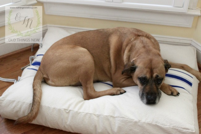Dog bed 022