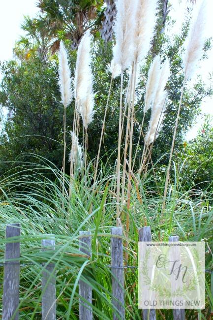 Tybee Island Grasses