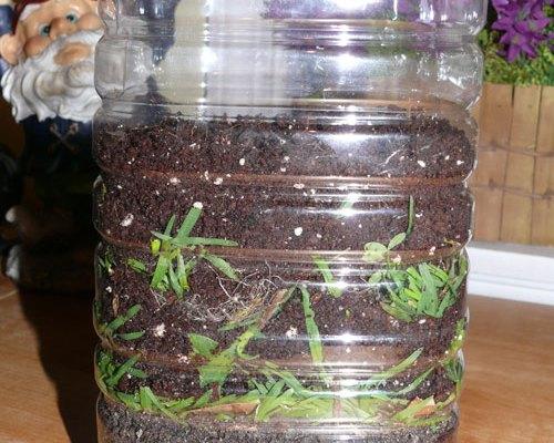 Worm Habitat
