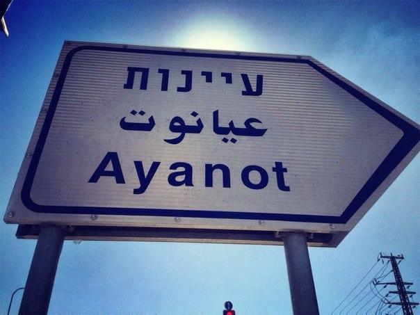 Аянот