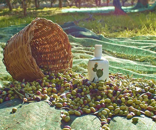 Idee regalo-Bomboniere-Cipa Agricola