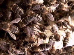 Atacada por abelhas, família pula no Araguaia  e dois morrem  afogados
