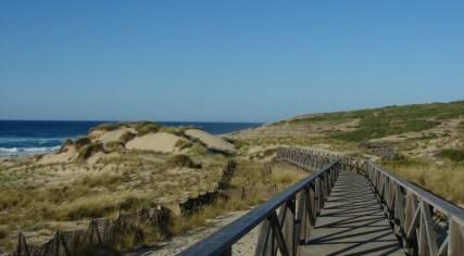 Dünen und Holzweg Mallorca