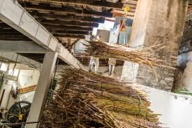 Zuckerrohr in Fabrik Madeira