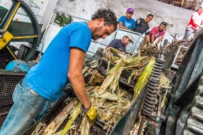 Arbeiter Zuckerrohr Verarbeitung Madeira