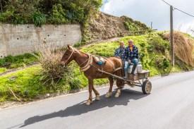 Pferdewagen Sao Miguel Azoren