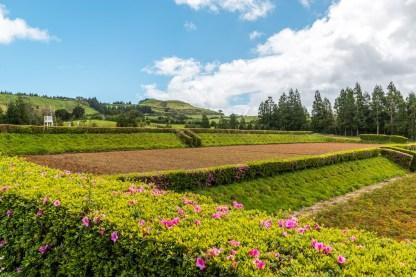 Felder und Blumen im Osten von Sao Miguel Azoren