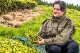 Frau in Teeplantage Azoren Sao Miguel